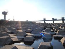 東京近郊、埼玉県行田市の利根大堰でサケの遡上を見る格安旅行の画像
